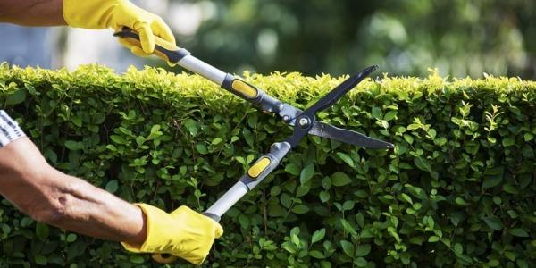 12 niezbędnych narzędzi ogrodowych dla początkujących, część 2.