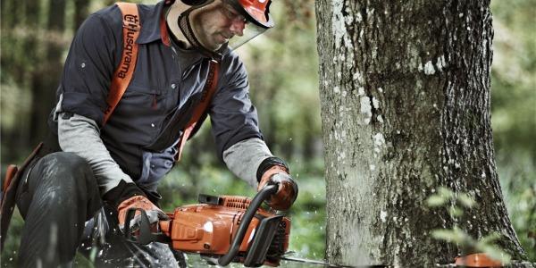 6 kroków do udanej wycinki drzew
