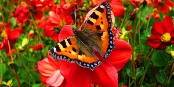 Jak stworzyć ogród jadalny przyjazny dzikim zwierzętom?