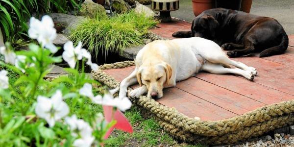 Rośliny przyjazne psom