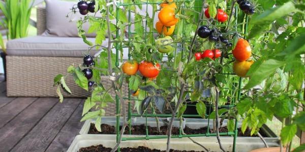 10 warzyw do uprawy w ogródku, część 1.