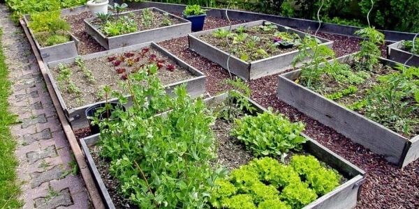 10 warzyw do uprawy w ogródku, część 2.