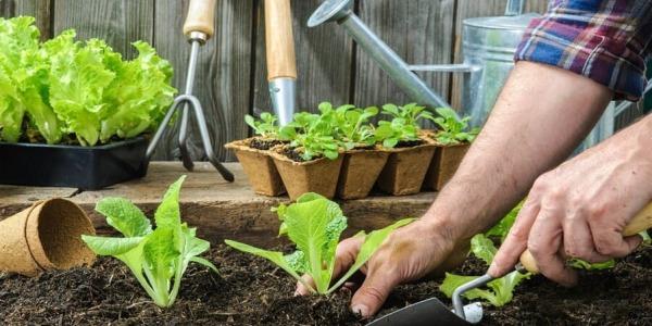Jak stworzyć ogród w cieniu?