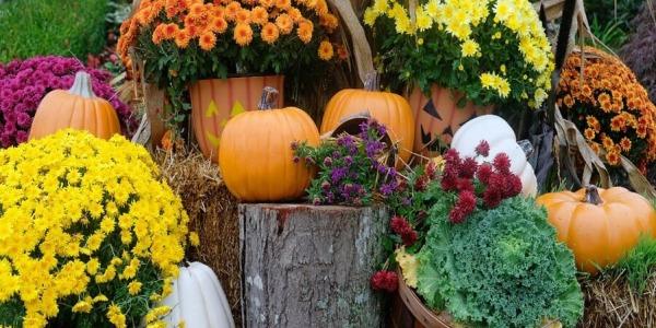 Jak zaplanować jesienny ogród?